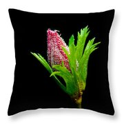 Anemone Flower Details Throw Pillow