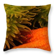 Anenome And Starfish Throw Pillow