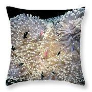 Anenomes 4 Throw Pillow