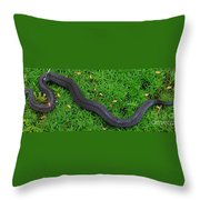 Anerythristic Red Belly Snake Throw Pillow