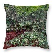 Angel Oak Tree 3 Throw Pillow