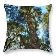 Angeles Sun -beautiful Tree With Sunburst In Angeles National Forest In The San Gabriel Mountails Throw Pillow