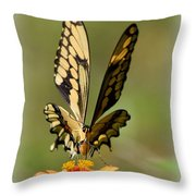 Angelic Butterfly  Throw Pillow