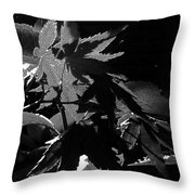 Angels Or Dragons B/w Throw Pillow