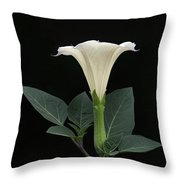 Angel's Trumpet Datura Throw Pillow by Angie Vogel