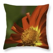 Angled To The Sun Throw Pillow