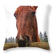 Angry Stallion Throw Pillow