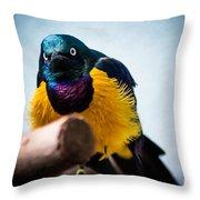 Angry Sunbird Throw Pillow