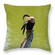 Anhinga Grooming Feathers Throw Pillow