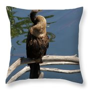 Anhinga Immature Throw Pillow