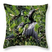 Anhinga Male Throw Pillow