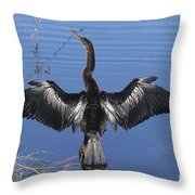 Anhinga  Sunbathing Throw Pillow