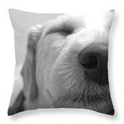 Animal Dog Days Throw Pillow
