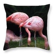 Animal - Flamingo - A Set Of Flamingoes Throw Pillow