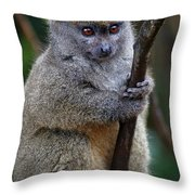 Animals 21 Throw Pillow