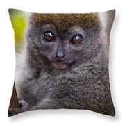 Animals 22 Throw Pillow