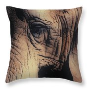 Animals Wrinkle Too Throw Pillow