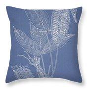 Anisogonium Lineolatum Throw Pillow