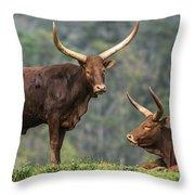 Ankole Longhorns Throw Pillow