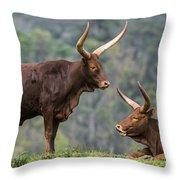 Ankole Longhorn 2 Throw Pillow