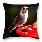 Anna's Hummingbird On Perch Throw Pillow