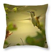 Rufus  Humming Bird  Throw Pillow