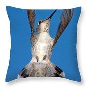 Anna's Hummingbird Tail Display Throw Pillow