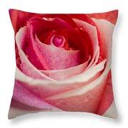 Anniversary Rose Throw Pillow