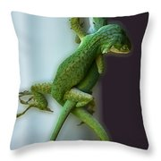 Anole Lovers Throw Pillow