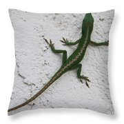 Anole On Stucco Throw Pillow