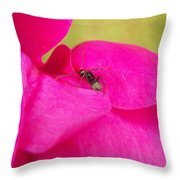 Ant On Pink Throw Pillow
