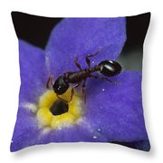 Ant With Pollen Enters Alpine Throw Pillow