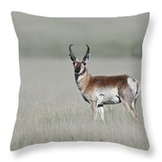 Antelope Buck Throw Pillow