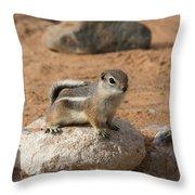 Antelope Ground Squirrel Throw Pillow