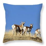 Antelope Herd   #0296 Throw Pillow