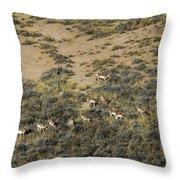Antelope Herd Panorama  Signed   20x80 Throw Pillow
