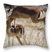 Antelope Leap  Throw Pillow