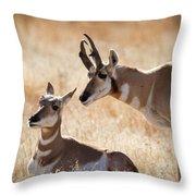 Antelope Love Throw Pillow