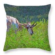 Antelope Near Wildlife Loop Road In Custer State Park-south Dakota- Throw Pillow