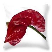 Anthurium - Backward Glance Throw Pillow