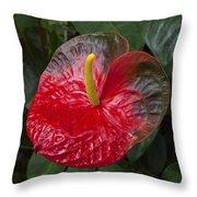 Anthurium Flamingo Flower Beauty Queen Fine Art Photography Print Throw Pillow