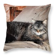 Antiquity Kitty Throw Pillow