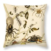 Ants Spiders Tarantula And Hummingbird Throw Pillow by Getty Research Institute