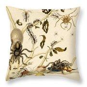 Ants Spiders Tarantula And Hummingbird Throw Pillow