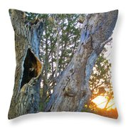 Anybody Home Throw Pillow
