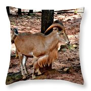 Aoudad Plus 2 Throw Pillow