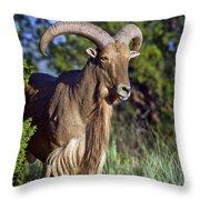 Aoudad Sheep  Throw Pillow