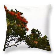 Apapane Atop An Orange Ohia Lehua Tree  Throw Pillow