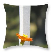 Appeal To Birds Throw Pillow