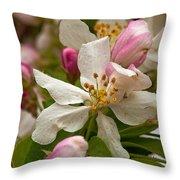 Apple Blooms Throw Pillow